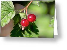 Wild Red Goosberries Greeting Card