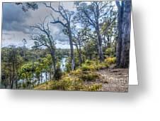 River Bush Track Greeting Card