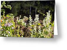 Wild Riverside Weeds And Flowers Greeting Card