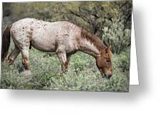Wild Roan Stallion  Greeting Card