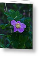 Wild Rose 1 Greeting Card
