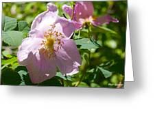 Wild Rose 2 Greeting Card