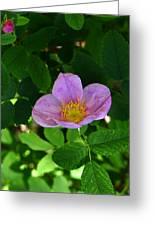 Wild Rose 4 Greeting Card