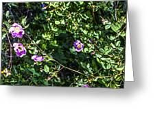Wild Rose Habitat Greeting Card