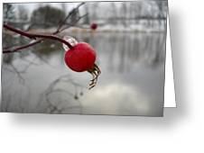 Wild Rose Hip On Mississippi River Bank Greeting Card