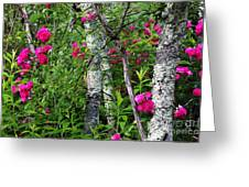 Wild Rose In Sumac Greeting Card