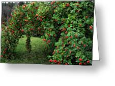 Wild Rosehips Greeting Card