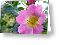 Wild Roses 2 Greeting Card