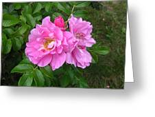 Wild Roses Greeting Card