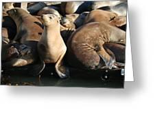 Wild Sea Lions  Greeting Card
