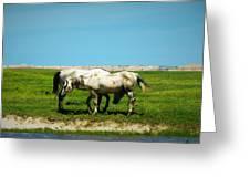 Wild South Dakota Greeting Card