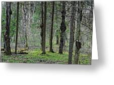 Wild Spring Forest Greeting Card