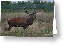 Wild Stag Greeting Card