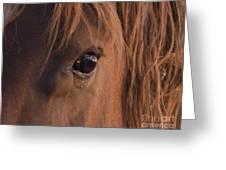 Wild Stallion's Eye Greeting Card