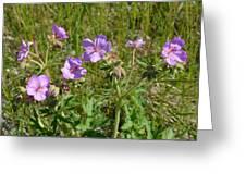 Wild Sticky Geranium Greeting Card