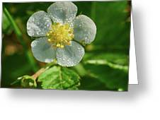 Wild Strawberry Flower Greeting Card