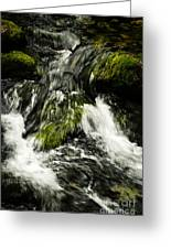 Wild Stream Of Green Moss Greeting Card