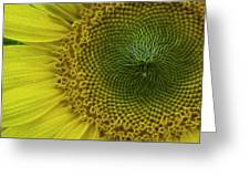 Wild Sunflower Greeting Card