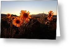 Wild Sunflowers Of Buena Vista Greeting Card