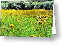 Wild Sunflowers Greeting Card