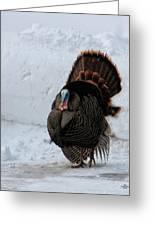 Wild Tom Turkey In Winter Greeting Card