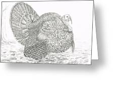 Wild Tom Turkey Greeting Card