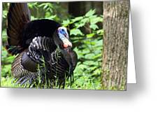 Wild Turkey 2 Greeting Card