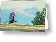 Wild Turkey Flight Greeting Card