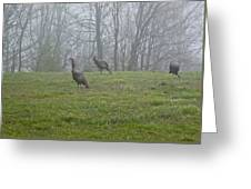 Wild Turkey Grazing At Dawn Greeting Card