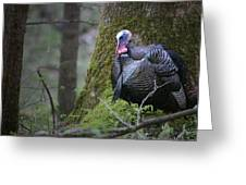Wild Turkey Great Smoky Mountains National Park Greeting Card