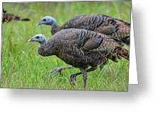 Wild Turkey In Shiloh Military Park Greeting Card