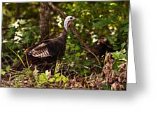 Wild Turkey In Tennessee Greeting Card