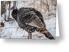 Wild Turkey Not The Whiskey Greeting Card