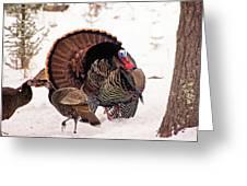 Wild Turkey Parade Print Greeting Card