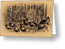 Wild Turkeys Greeting Card by Bill Cannon