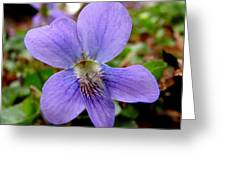 Wild Violet 1 Greeting Card