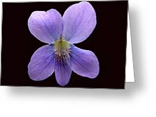 Wild Violet On Black Greeting Card