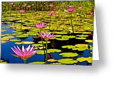 Wild Water Lilies 3 Greeting Card