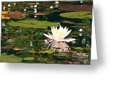 Wild Water Lilly Greeting Card