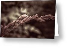 Wild Wheat Greeting Card