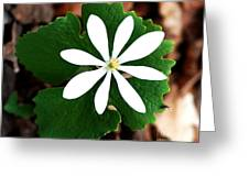 Wild White Greeting Card