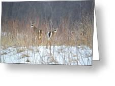 Wild Winter Greeting Card