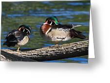 Wild Wood Ducks On A Log Greeting Card