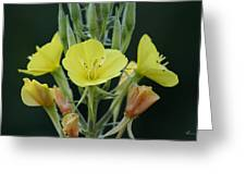 Wild Yellow Greeting Card