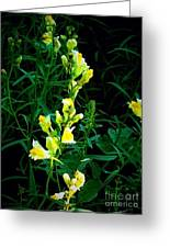 Wild Yellow Flowers On Black Background Greeting Card