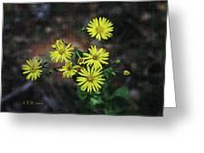 Wild Yellow Flowers Greeting Card
