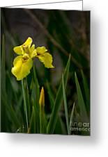 Wild Yellow Iris Greeting Card