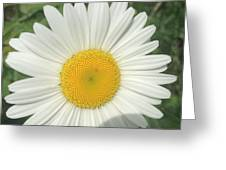 Wilddaisy Greeting Card