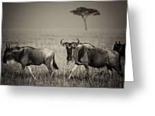 Wildebeest 8947b Greeting Card