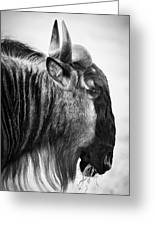 Wildebeest Greeting Card
